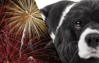 Træn nytårsaften med din hund dogsrus.dk