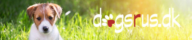 dogsrus.dk er hundetræning for dig og din hund