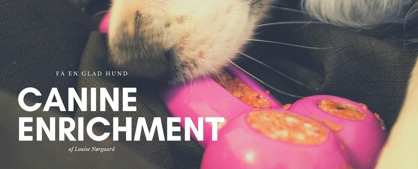 canine enrichment blog dogsrus.dk