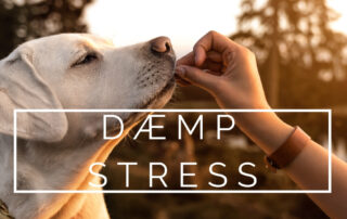stressdæmpende fødevarer dogsrus.dk
